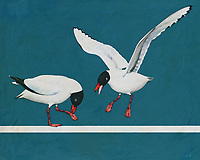 When we look upon this scene, as depicted by the brilliant artist Jan Keteleer, we see a Black Headed Gull coming towards us. We can imagine looking out the window and being able to take in such a scene with our own eyes. You can imagine the tranquility of seeing this bird on a beautiful day by the ocean. This is a seaside visual. -<br /> <br /> BUY THIS PRINT AT<br /> <br /> FINE ART AMERICA<br /> ENGLISH<br /> https://janke.pixels.com/featured/a-black-headed-gull-arriving-jan-keteleer.html<br /> <br /> <br /> WADM / OH MY PRINTS<br /> DUTCH / FRENCH / GERMAN<br /> https://www.werkaandemuur.nl/nl/shopwerk/Een-meeuw-met-zwarte-kop-die-aankomt/500261/132