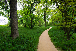 Woodland path at Jupiter Artland outside Edinburgh , Scotland , United Kingdom