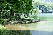 Montenegro, Kolasin, Biogradska Gora forest and national park