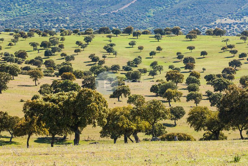Dehesa de Encinas (Quercus rotundifolia). Valle de Alcudia. Ruta de Don Quijote. Almodovar del Campo. Ciudad Real ©Antonio Real Hurtado / PILAR REVILLA