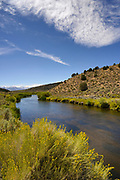 Gray Rabbitbrush, cloud and the East Walker River, Toiyabe National Forest, Mono County, California