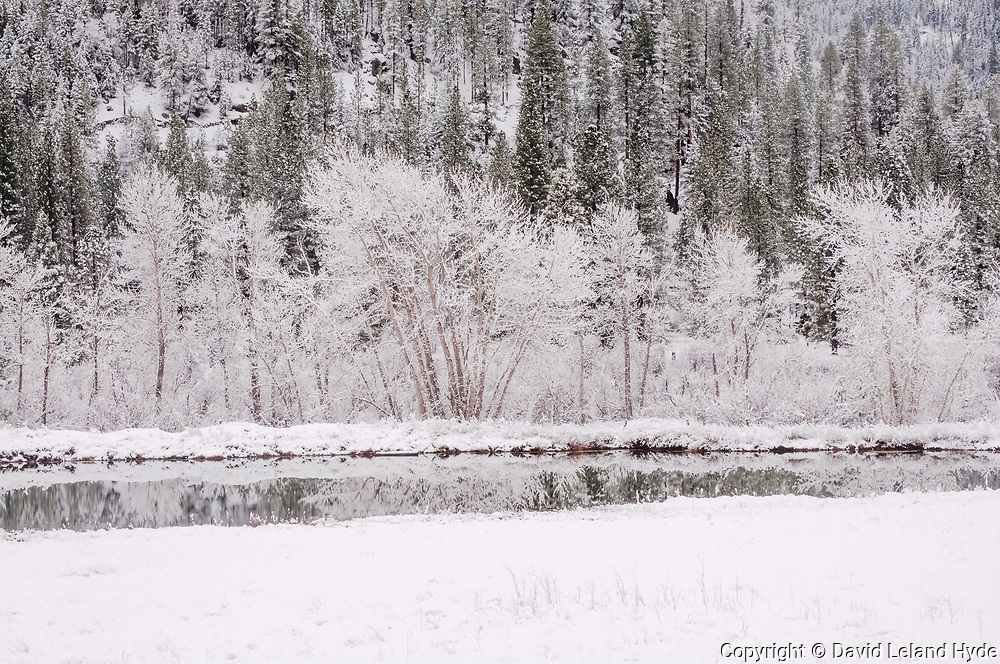 Cottonwood Trees, Heart K Pond, Genesee Valley, California Mountains, Heart K Ranch, Winter Forest, Sierra Nevada Mountains, Cool Water Pools, Winter Scenes, Fir Forest, Shade Trees