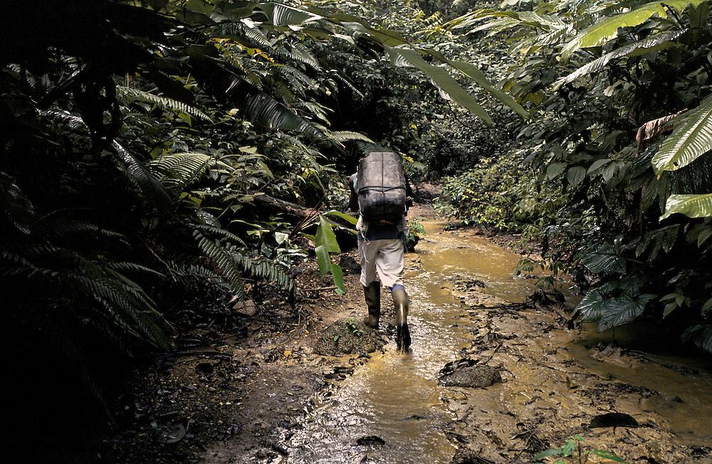 Guyane française, boca do jacare, crique Ipoussing.<br /> Zone d'activite aurifere clandestine bresilienne. Les pirogues assurent le ravitaillement de marchandises et des hommes depuis Oiapoque.<br /> Un reseau de pistes permet aux porteurs d'alimenter la foret.<br /> On estime que 300 Kg d'or clandestins sont vendus chaque mois dans les comptoirs bresiliens frontaliers. <br /> La prefecture pretend arreter cette activitvite et mene quelques actions coup de poing en envoyant les gendarmes dans le cadre d'operations 'dites anaconda . D'importants stocks de materiel clandestins ont ete saisis et brules depuis le debut de l'offensive prefectorale. Contrairement aux militaires francais, les clandestins sont chez eux en foret et les campements reapparaissent a peine detruits. Quand les gendarmes restent trop longtemps sur place, les bordels bresiliens s'installent et calment les ardeurs.