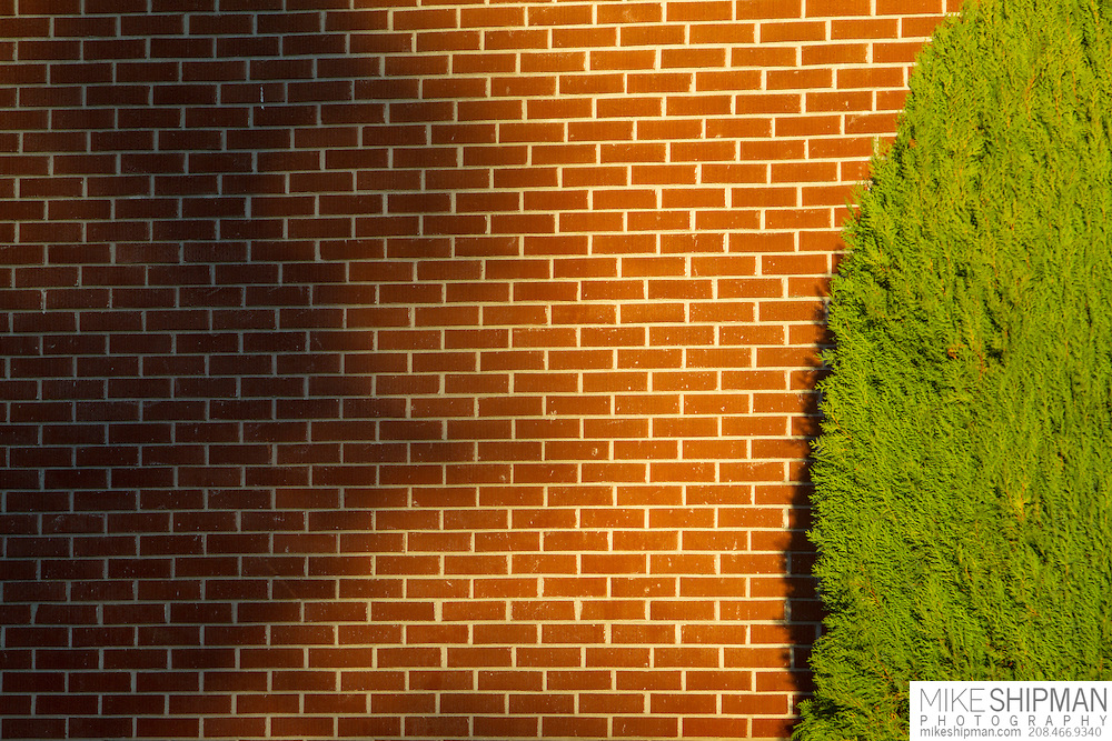 warm afternoon light on a brick wall with a green juniper and a shadow, Hyde Park, Boise, Idaho, USA