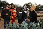 Tucson Village Farm, Tucson, Arizona, USA.
