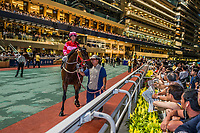 Hong Kong, China- June 5, 2014: horse race at Happy Valley racecourse