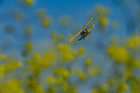 Rice seeding at Montna Farms, Saturday, April 18, 2020.<br /> Photo Brian Baer
