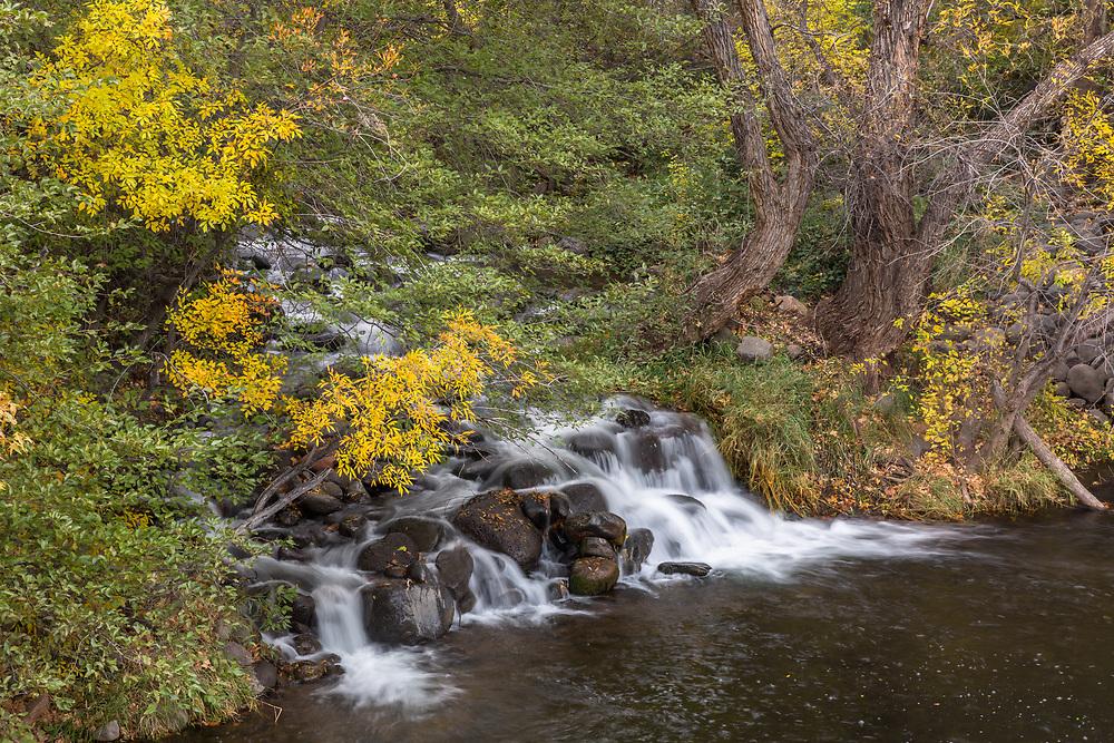Last Remaining Fall Colors Along Oak Creek