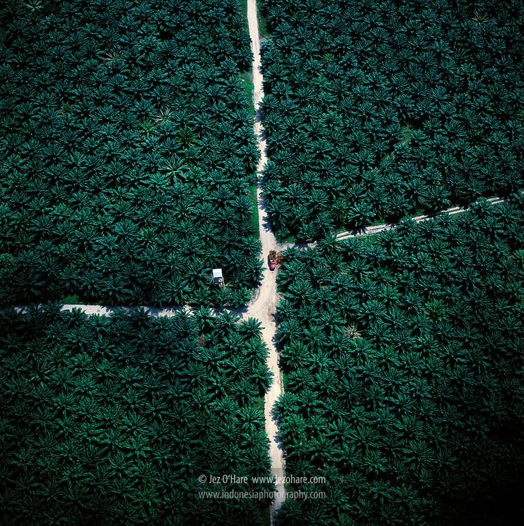 Oil palm plantation, Lampung, Sumatra, Indonesia.