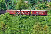 Sri Lanka, province de Nuwara Eliya, train dans les plantations de thé // Sri Lanka, Ceylon, Central Province, Nuwara Eliya, train in the tea plantation
