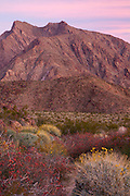Wildflowers and Indian Head mountain, Anza-Borrego Desert State Park, California.