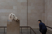 A visitor leans to learn about the The Head of the Horse of Selene, part of the British Museums Elgin Marbles that originate from the Parthenon in Athens, on 28th February 2017, in London, England.