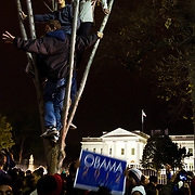 People climb trees while celebrating in front of the White House in Washington DC after Barack Obama was announced the winner of the 2012 presidential elections.
