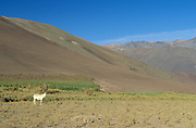 Nevado Tres Cruces National Park, North Chile, Atacama Region