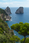 Faraglioni rock stacks off the coast of Capri island with Italian Stone Pine trees in the foreground.