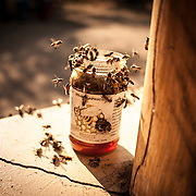 African bees swarm over a jar of honey at a campground near Tarangire National Park in northern Tanzania.