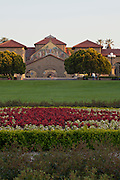 A sculptured garden of flowers on the campus of Stanford University.