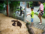 17 AUGUST 2018 - BANGKOK, THAILAND:   A child looks at the otter display in Dusit Zoo in Bangkok. The zoo opened in 1938. The zoo grounds were originally the Dusit Royal Garden. The zoo is scheduled to close by the end of August 2018 because it is being relocated to Nakhon Pathom province, south of Bangkok.      PHOTO BY JACK KURTZ