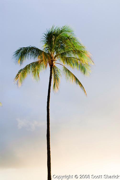 A single palm tree lit by the setting sun.