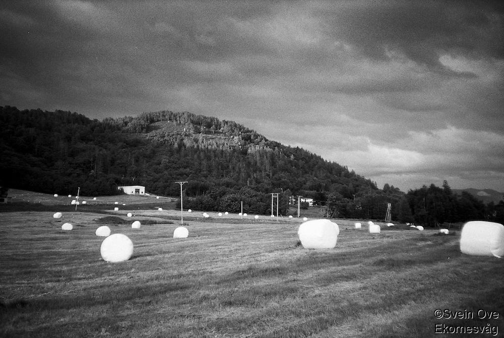 Rundballer på marka etter slåtten på Kvalstein på Ellingsøya.<br /> Foto: Svein Ove Ekornesvåg