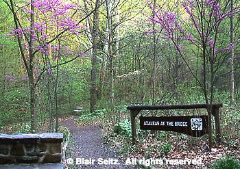 Bowman's Hill Wildflower Preserve, Philadelphia gardens and arboretums, Washington Crossing, Bucks Co., PA