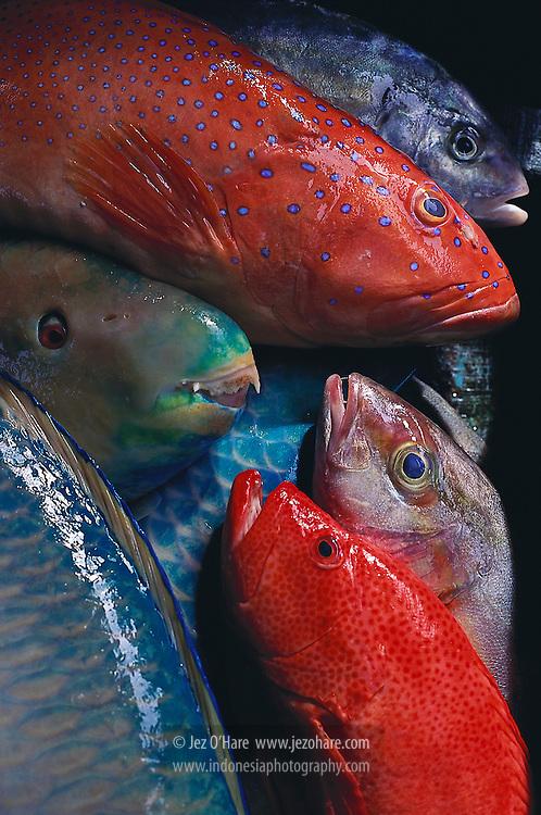 Fishes, Aru Islands, Maluku, Indonesia.