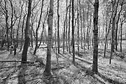 Trees in the Seine River Forest<br />Winnipeg<br />Manitoba<br />Canada