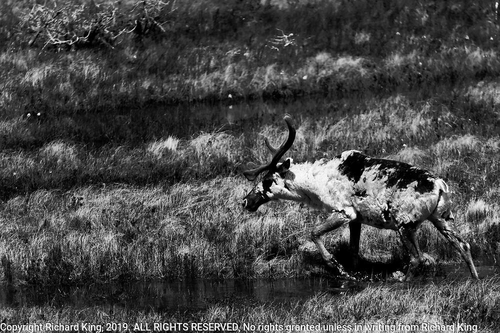 Wildlife photography in Newfoundland, Canada