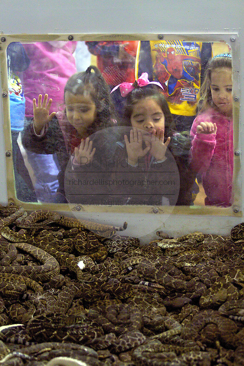 SWEETWATER, TX - MARCH 14: Young girls look at a pit filled with western diamondback rattlersnakes brought in by hunters during the 51st Annual Sweetwater Texas Rattlesnake Round-Up, March 14, 2009 in Sweetwater, Texas. Approximately 24,000 pounds of rattlesnakes will be collected, milked for venom and the meat served to support charity. (Photo by Richard Ellis)