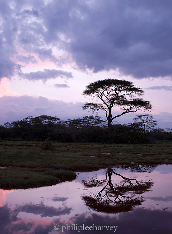 Silhouette of an Acacia tree with refelection in water, Maasai Mara National Reserve, Kenya