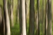 Tree trunks Magnolia Gardens,Charleston,South Carolina