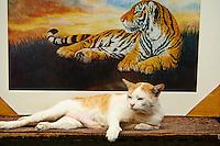 Thailande, Bangkok, le chat et le tigre // Thailand, Bangkok, the cat and the tiger