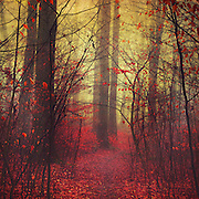 Dreamy forest on a misty day - texturized photograph<br /> Prints, phone cases & more:<br /> http://society6.com/product/way-in_print#1=45