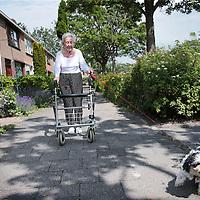 Nederland, Purmerend, 7 juli 2015.<br /> verhaal over de vergrijzing van de bevolking in de groeikernen (plaatsen als Zoetermeer, Spijkenisse, Nieuwegein enzovoorts). Al die ouders van gezinnen die er in de jaren zeventig en tachtig kwamen wonen, lopen nu tegen de zeventig<br /> Vergrijzing in de wijk Wheermolen in Purmerend.<br /> beetje treurige jarenzeventig-rijtjeshuizen met inderdaad veel ouderen, mensen met rollator en scootmobiel en zo. In overdekte winkelcentrum Makado (aan het Kennedyplein) zag ik een rollatordichtheid die ik, geloof ik, nog nooit eerder gezien heb, op zomaar een doordeweekse vrijdagmiddag tussen drie en vier.<br /> Op de foto: een oudere vrouw met rollator laat haar hond uit in de Henry Dunantstraat tegenover het Kennedyplein.<br /> <br /> <br /> Foto: Jean-Pierre Jans