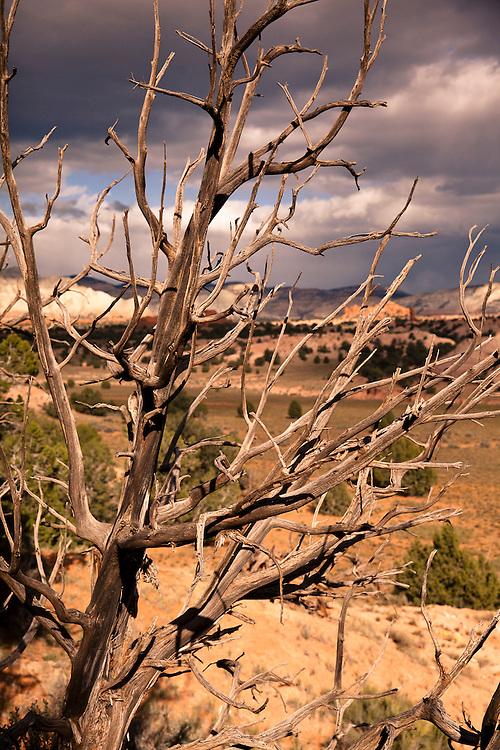 Taken at Kodachrome Basin State Park, Utah.