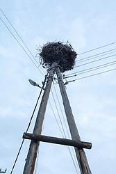 Bird Nest On Electrical Poles, Areni