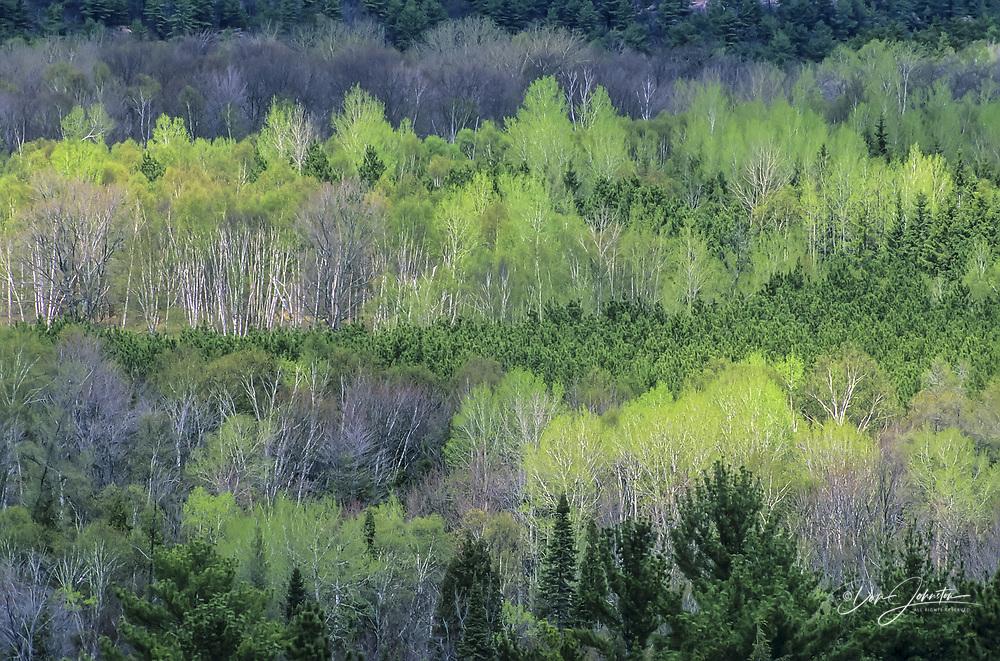 Spring forest from Granite Ridge Trail, Killarney PP, Ontario, Canada