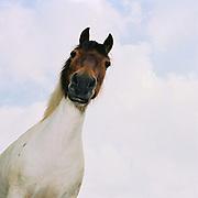 Portrait of a horse at Warren Farm, Simonsbath, Exmoor, Somerset, UK