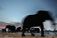 Impressionen  mit Elefanten-Bullen aus der Region Savuti im Chobe Nationalpark bei rot-orangem Sonnenaufgang