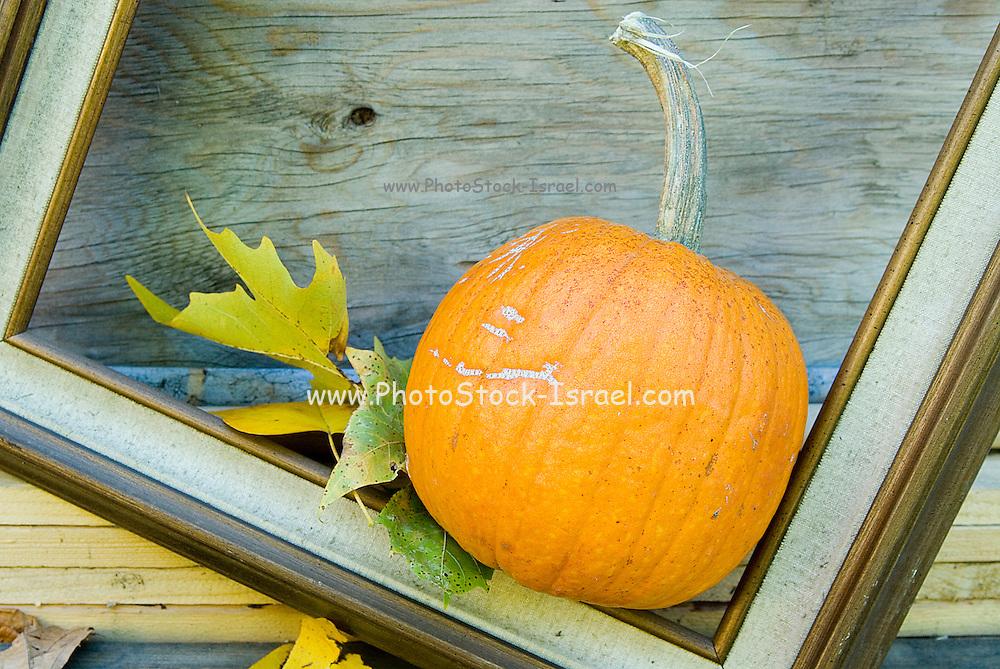 A pumpkin in a picture frame