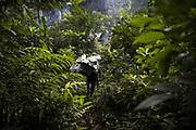 Pour 90%, c'est une économie de subsistance dépendant majoritairement de l'agriculture et des ressources de la forêt telle que la chasse, la pêche, la cueillette de fruits, le miel, les palmiers, les bois de construction.<br /> <br /> For 90%, it is a subsistence economy depending mainly on agriculture and forest resources such as hunting, fishing, fruit picking, honey, palm trees and timber.