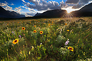 Wildflowers at sunset in Glacier National Park