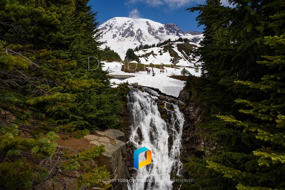 A view of Mount Rainier in Mount Rainier National Park.