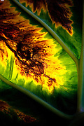 Burnt Palm Leaf