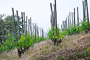 vineyard delas freres tournon-s-r rhone france