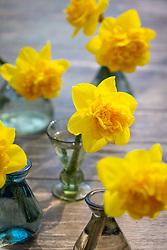 Narcissus 'Sunday Star'