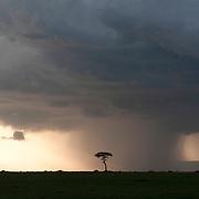 A rainstorm moves across the Serengeti Plains. Masai Mara National Reserve, Kenya, Africa