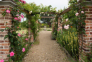 Rosa 'Handel' a cream coloured rose with pink edges and Rosa 'Alister Stella Grey' a yellow climber and Rosa 'Opehlia Sombreuil', a pale pink climbing rose growing on an arbour with Sisyrinchium stratium on the ground (yellow pigroot) in the formal garden at Hindringham Hall, Hindringham, Norfolk