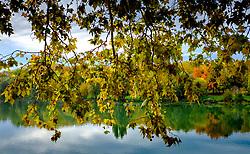 Autumn leaves hang over the Garonne River in Toulouse, France<br /> <br /> (c) Andrew Wilson   Edinburgh Elite media