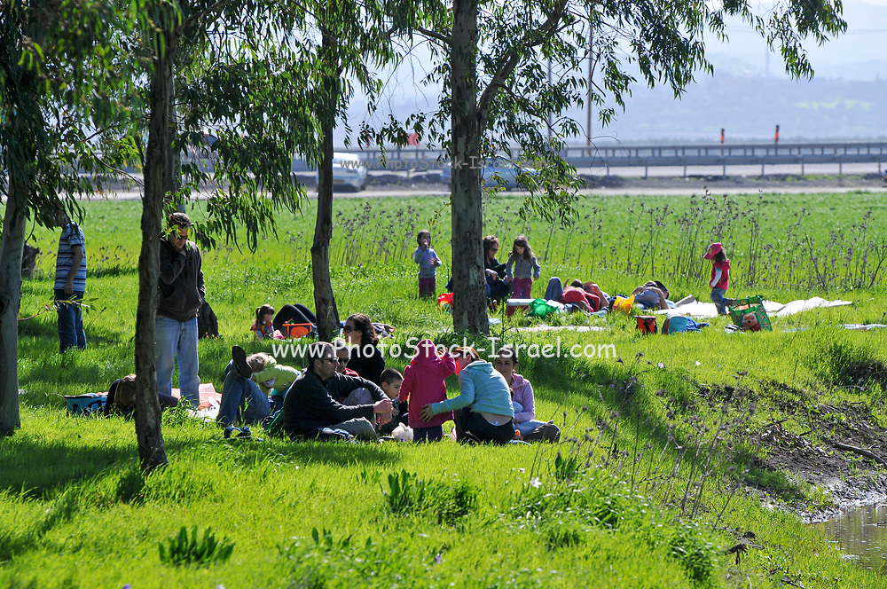 family picnic outdoors in a fresh green spring meadow. Photographed near Megido, Galilee, Israel in February